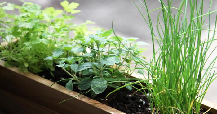 Le piante giuste da mettere in casa per purificare l 39 aria for Piante da comprare