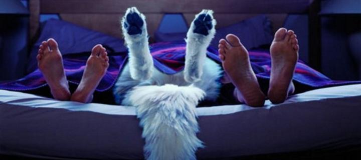 Dormire con gli animali domestici fa bene o male blog buoni sconto coupon - Dormir au milieu des animaux ...