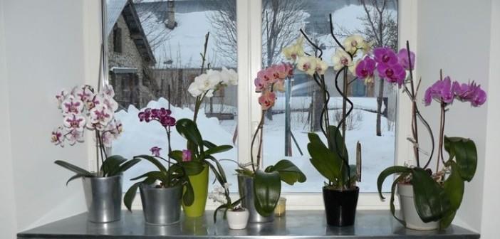 Come Coltivare Le Orchidee In Casa : Come coltivare le orchidee buoni sconto coupon