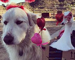 Negozio di San Valentino Amazon: Tutte le idee regalo