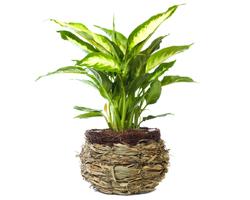 Sconto piante verdi con Italian Flora