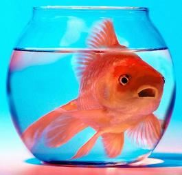 Come prendersi cura di un pesce rosso blog buoni sconto for Boccia pesci