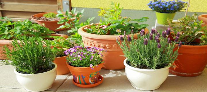 Rimedi naturali contro le zanzare blog buoni sconto coupon - Rimedi contro le zanzare in giardino ...