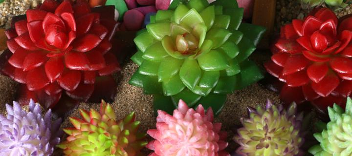 Consigli per coltivare le piante grasse blog buoni for Piante grasse succulente