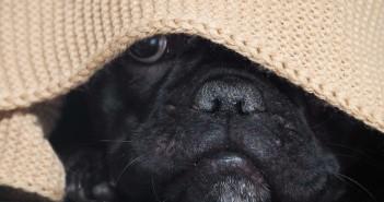 un cane che non vive un capodanno senza botti