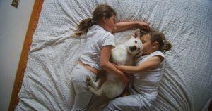 Cane di famiglia